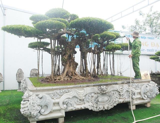 Mục sở thị bộ ba sanh cổ giá hơn 1 triệu USD của nghệ nhân Nam Định - 1