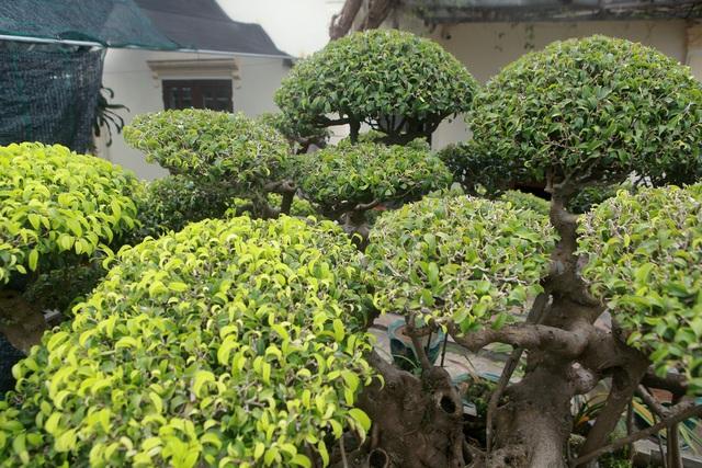 Mục sở thị bộ ba sanh cổ giá hơn 1 triệu USD của nghệ nhân Nam Định - 11