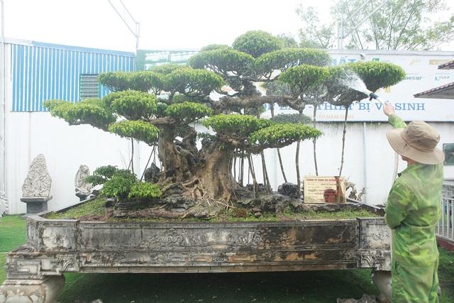 Mục sở thị bộ ba sanh cổ giá hơn 1 triệu USD của nghệ nhân Nam Định - 5