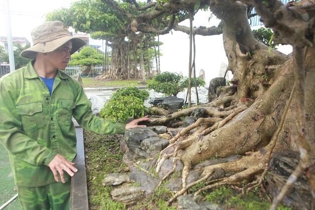Mục sở thị bộ ba sanh cổ giá hơn 1 triệu USD của nghệ nhân Nam Định - 6