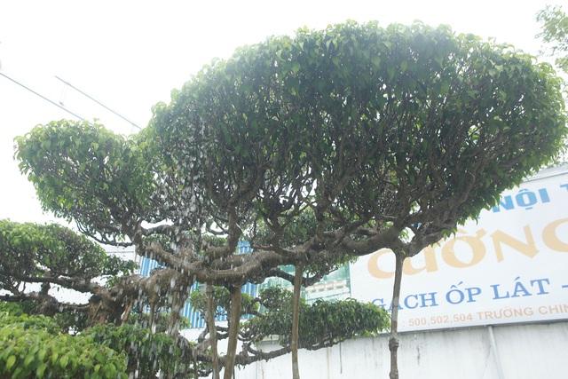 Mục sở thị bộ ba sanh cổ giá hơn 1 triệu USD của nghệ nhân Nam Định - 7