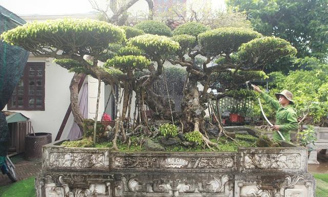 Mục sở thị bộ ba sanh cổ giá hơn 1 triệu USD của nghệ nhân Nam Định - 8