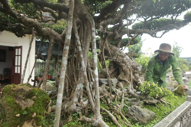 Mục sở thị bộ ba sanh cổ giá hơn 1 triệu USD của nghệ nhân Nam Định - 10