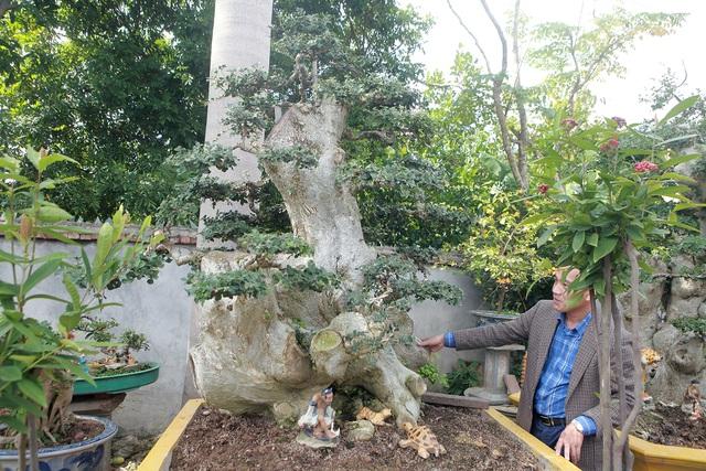 Xâm nhập vườn duối cổ trăm tuổi giá triệu đô của đại gia Hải Dương - 5