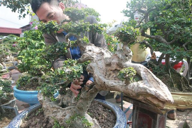 Xâm nhập vườn duối cổ trăm tuổi giá triệu đô của đại gia Hải Dương - 9
