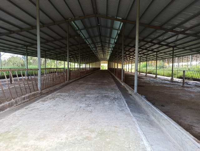 Người dân ngã ngửa trước sự biến hóa của dự án nuôi bò 2.600 tỷ đồng  - 2