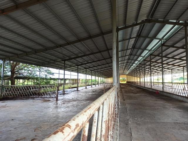 Người dân ngã ngửa trước sự biến hóa của dự án nuôi bò 2.600 tỷ đồng  - 3