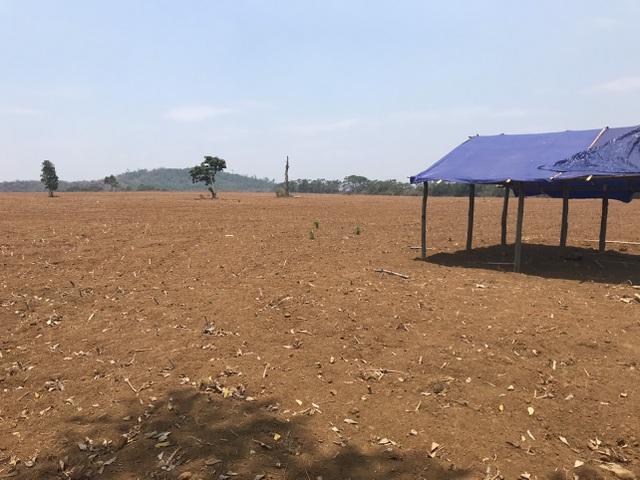 Người dân ngã ngửa trước sự biến hóa của dự án nuôi bò 2.600 tỷ đồng  - 7