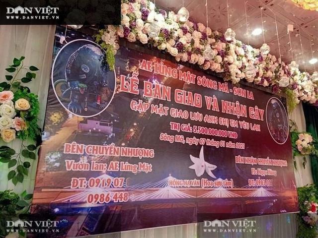 Sơn La: Xôn xao vụ chuyển nhượng lan đột biến Phi điệp Hồng Hạ Vân trị giá 5,5 tỷ đồng - 2