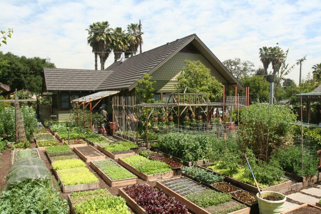 Gia đình biến vườn nhỏ thành nông trại, mỗi năm thu về cả tấn rau