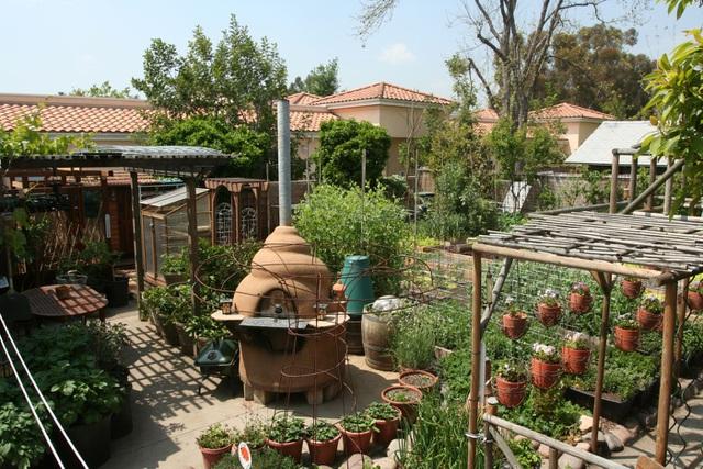 Gia đình biến vườn nhỏ thành nông trại, mỗi năm thu về cả tấn rau - 4