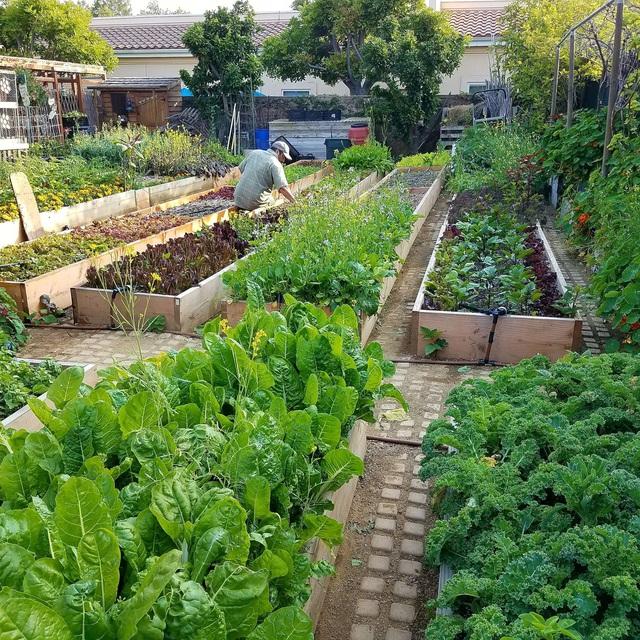 Gia đình biến vườn nhỏ thành nông trại, mỗi năm thu về cả tấn rau - 6