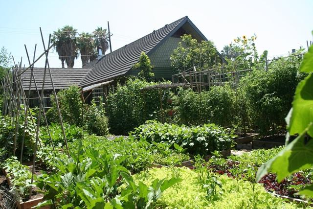 Gia đình biến vườn nhỏ thành nông trại, mỗi năm thu về cả tấn rau - 7
