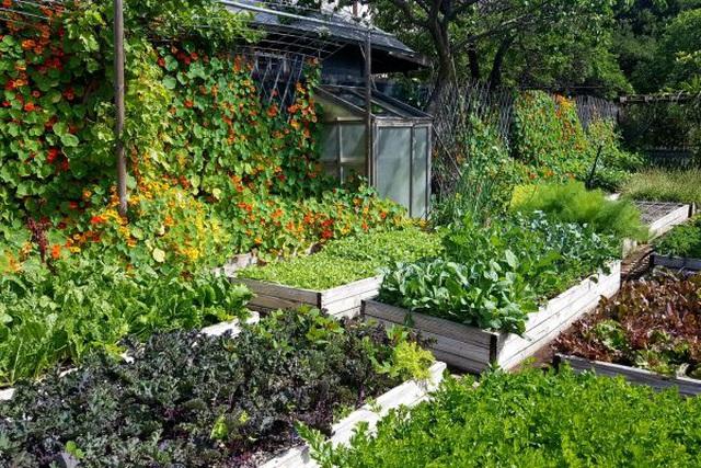 Gia đình biến vườn nhỏ thành nông trại, mỗi năm thu về cả tấn rau - 8