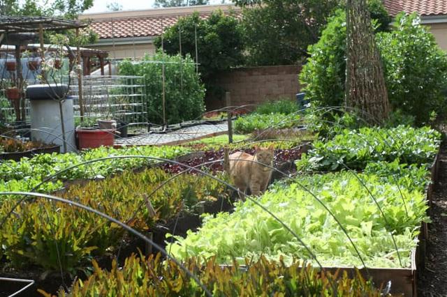 Gia đình biến vườn nhỏ thành nông trại, mỗi năm thu về cả tấn rau - 10