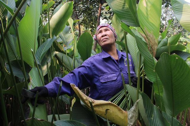 Hồ hởi thu hoạch ngọc xanh, dân Hà Nội kiếm tiền triệu mỗi ngày dịp Tết - 4