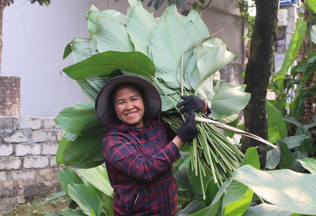 Hồ hởi thu hoạch ngọc xanh, dân Hà Nội kiếm tiền triệu mỗi ngày dịp Tết - 6