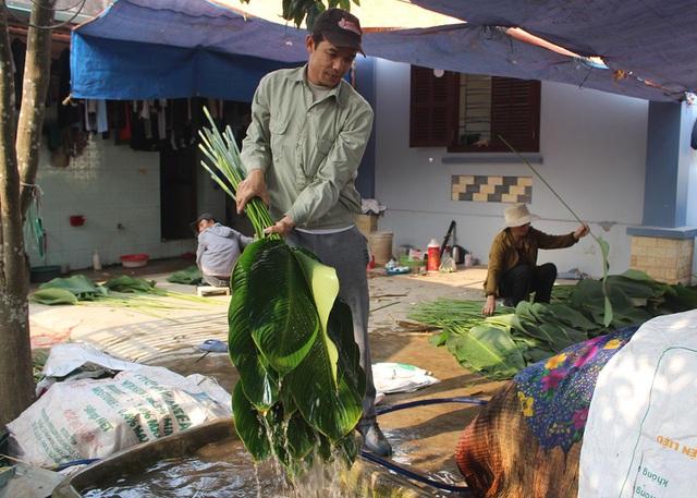 Hồ hởi thu hoạch ngọc xanh, dân Hà Nội kiếm tiền triệu mỗi ngày dịp Tết - 9