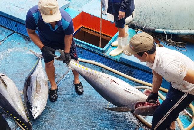 Giáp Tết, đơn hàng cá ngừ đại dương đi Mỹ, châu Âu... tăng vọt - 3