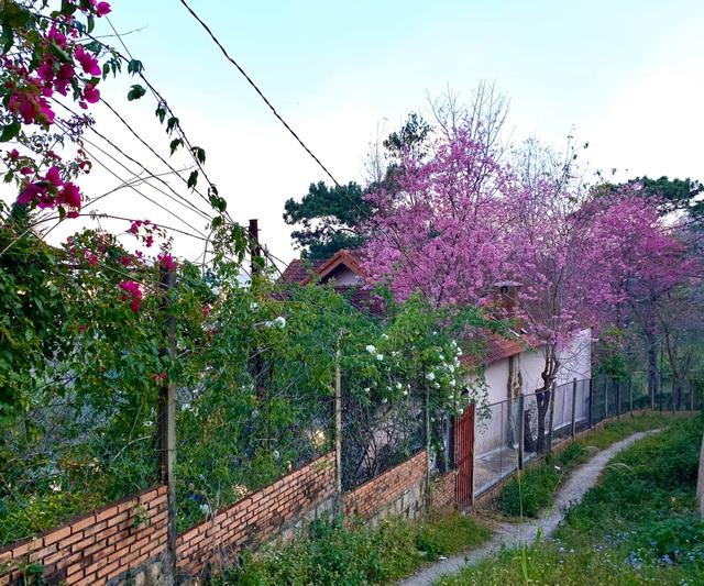 Vợ chồng ở Sài Gòn lên Đà Lạt xây ngôi nhà hoa đẹp như bước ra từ cổ tích - 1