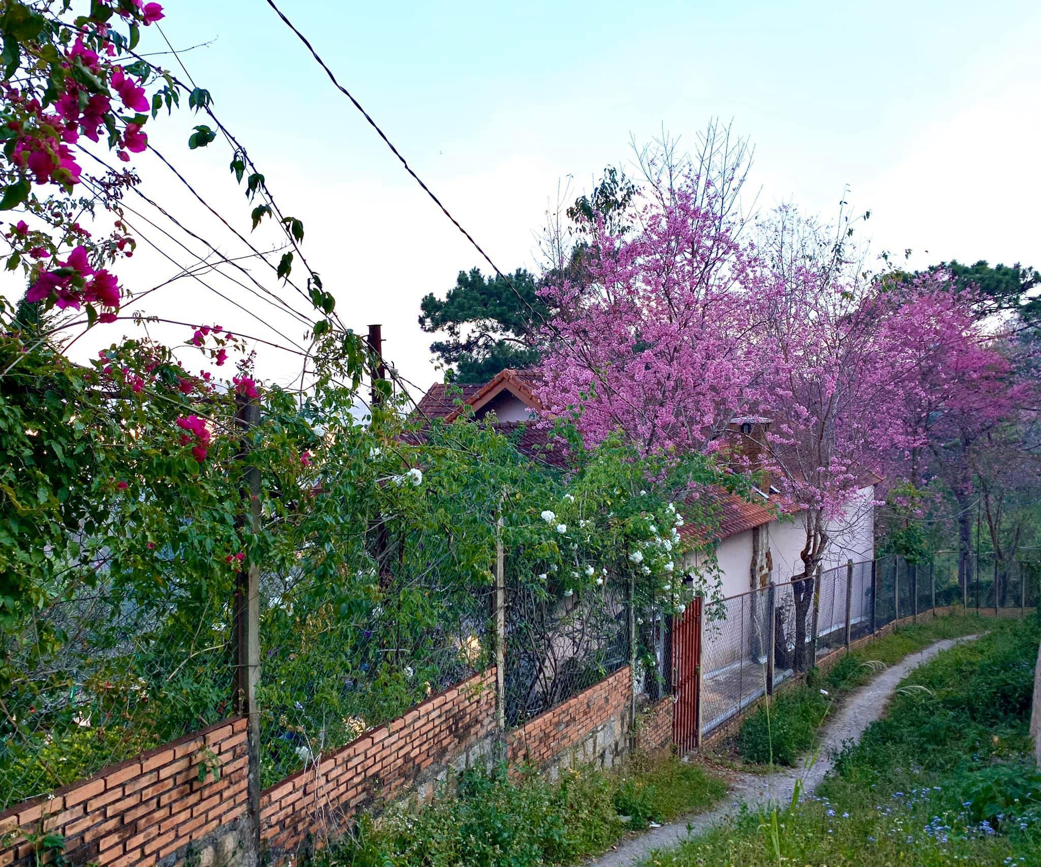 Vợ chồng ở Sài Gòn lên Đà Lạt xây ngôi nhà hoa đẹp như bước ra từ cổ tích
