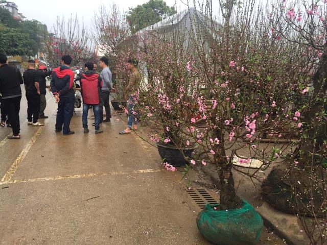 Lào Cai: Lan, đào, quất phô diễn tại chợ biên giới với giá rẻ bất ngờ! - 11