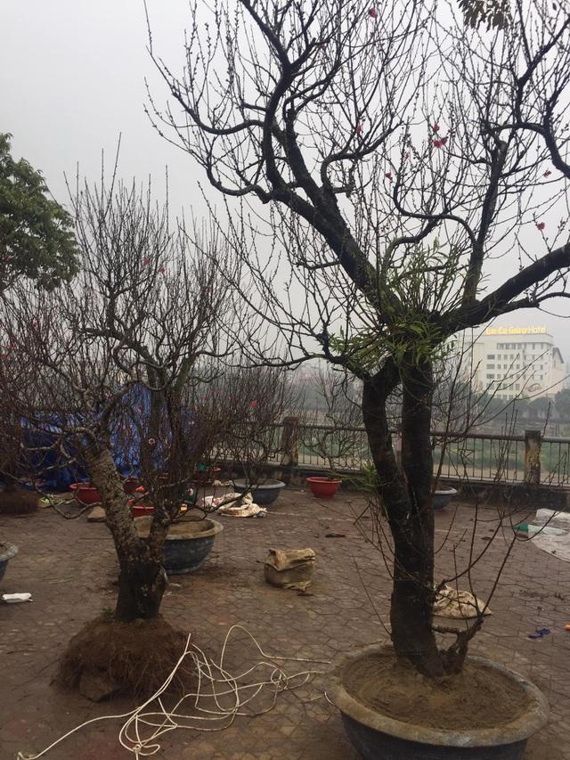 Lào Cai: Lan, đào, quất phô diễn tại chợ biên giới với giá rẻ bất ngờ! - 8