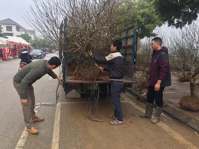 Lào Cai: Lan, đào, quất phô diễn tại chợ biên giới với giá rẻ bất ngờ! - 9