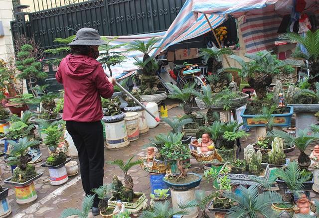 Chán mai, ngán đào, nhiều thượng đế săn lùng mua vạn tuế bonsai chơi Tết - 6