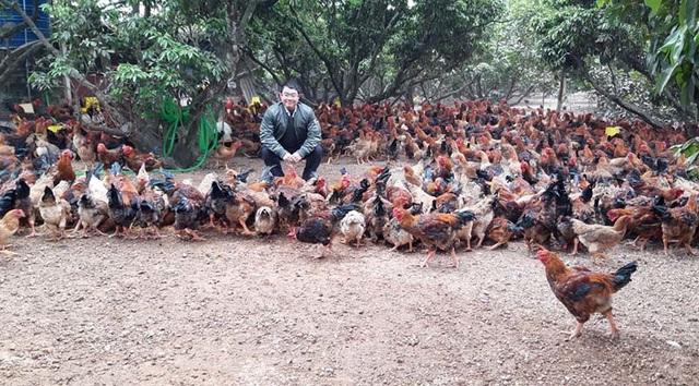 Rau củ thối nát vứt đầy ruộng, 700.000 con gà