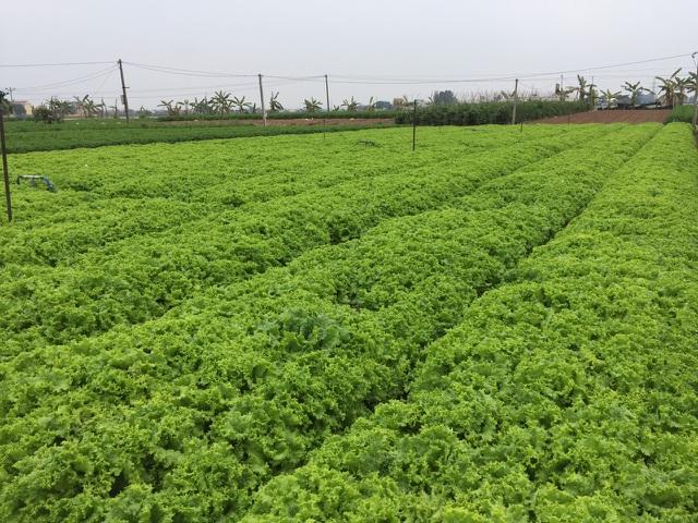 Hà Nội ra tay giải cứu hàng chục nghìn tấn nông sản vùng dịch - 2