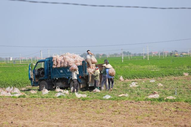 Hà Nội ra tay giải cứu hàng chục nghìn tấn nông sản vùng dịch - 3