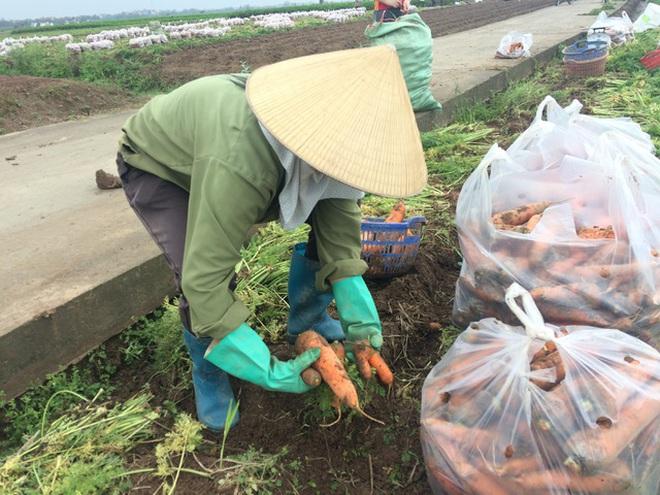 Sự hà khắc của hàng xóm và cuộc chữa cháy chóng vánh nông sản Hải Dương - 5