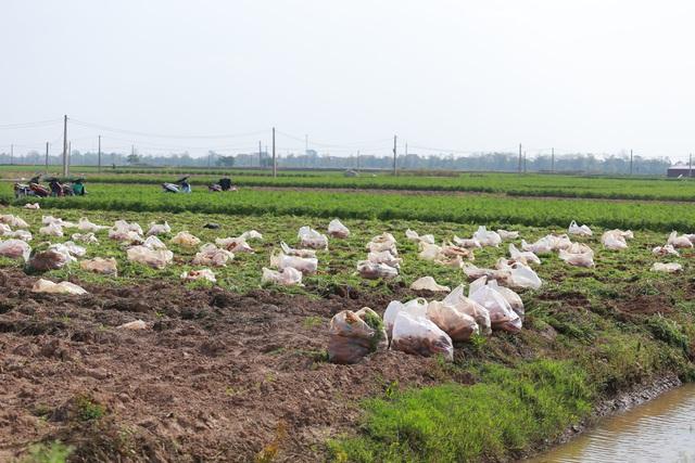 Tính hai mặt của giải cứu nông sản và những hệ lụy với xuất khẩu - 2