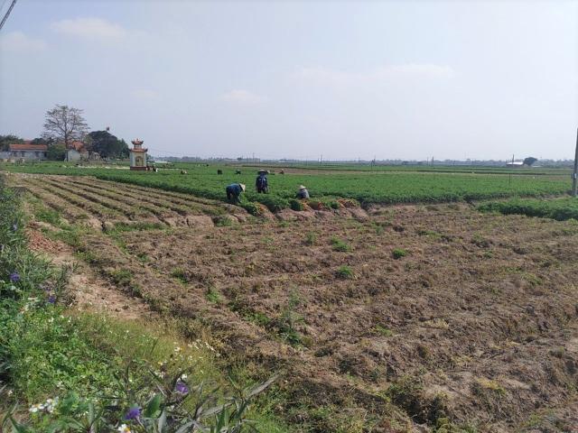 Tính hai mặt của giải cứu nông sản và những hệ lụy với xuất khẩu - 4