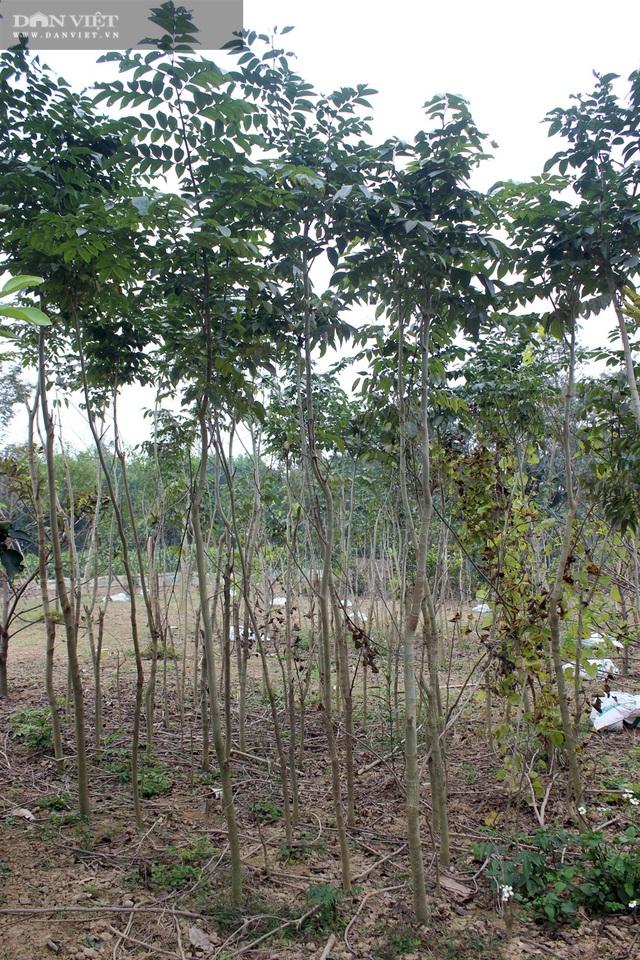 Vùng đất nông dân toàn chôn kho báu ngoài vườn, hễ ra ngõ là gặp tỷ phú - 4
