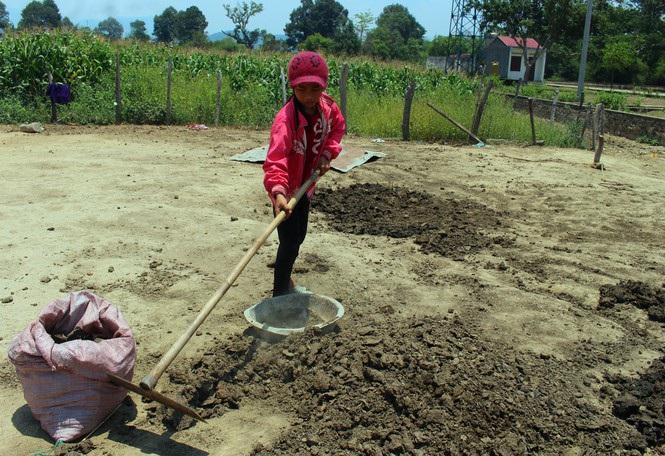 Người dân vùng sâu Đắk Lắk tăng thu nhập từ nghề... nhặt phân bò