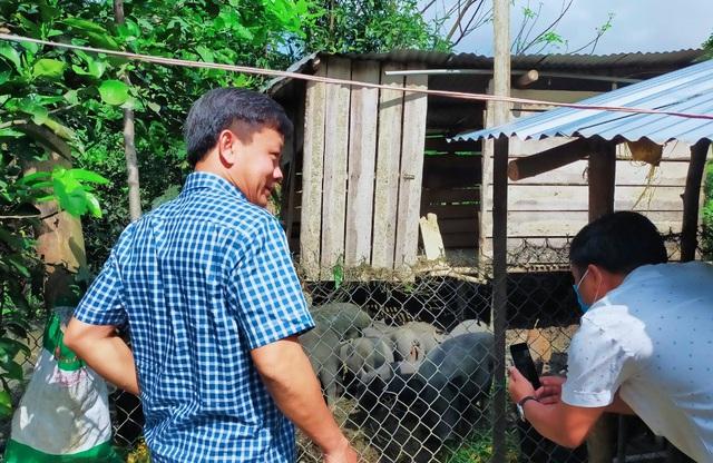 Kỳ lạ giống lợn đen đồng bào nuôi không kịp lớn để bán - 1