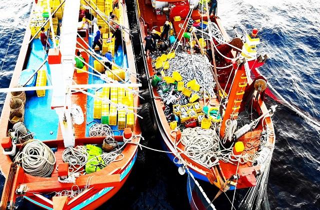Làng biển thu 1.000 tỷ đồng mỗi năm nhờ đi săn loài cá khủng - 5