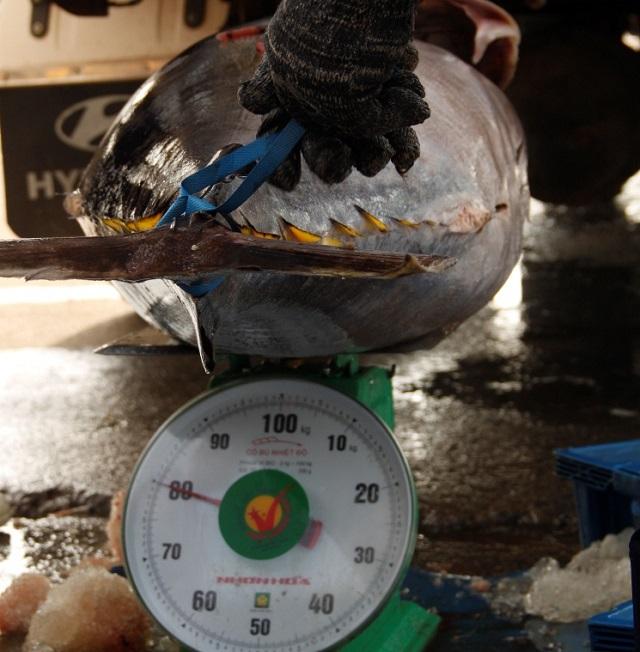 Làng biển thu 1.000 tỷ đồng mỗi năm nhờ đi săn loài cá khủng - 7