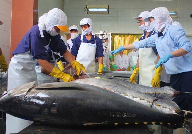 Làng biển thu 1.000 tỷ đồng mỗi năm nhờ đi săn loài cá khủng - 8