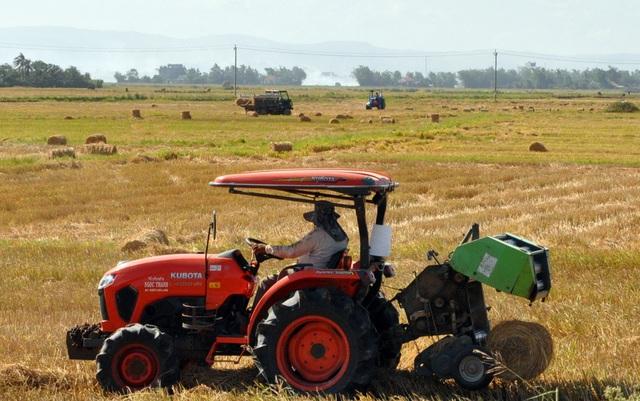 Đội nắng 40 độ C, nông dân kiếm tiền từ nghề cuộn rơm thuê - 1