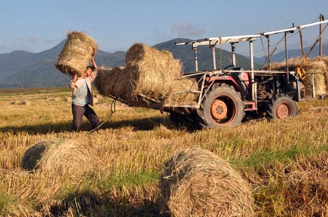 Đội nắng 40 độ C, nông dân kiếm tiền từ nghề cuộn rơm thuê - 4