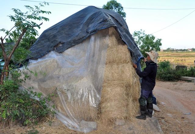 Đội nắng 40 độ C, nông dân kiếm tiền từ nghề cuộn rơm thuê - 8