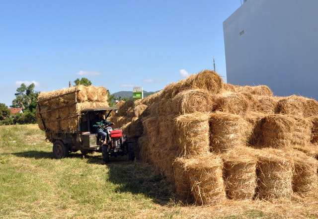 Đội nắng 40 độ C, nông dân kiếm tiền từ nghề cuộn rơm thuê - 9