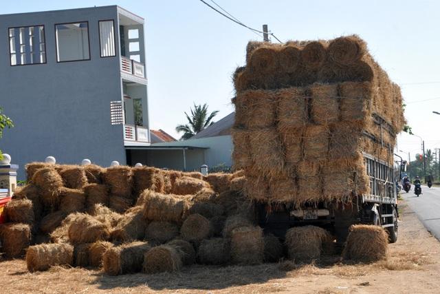 Đội nắng 40 độ C, nông dân kiếm tiền từ nghề cuộn rơm thuê - 10