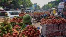 Vải Bắc Giang không được mùa, vừa mất giá và khó tiêu thụ do dịch bệnh