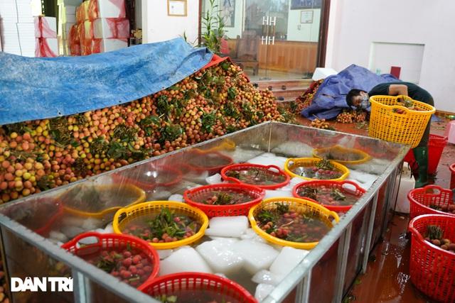 Bắc Giang: Nông dân kêu trời vì giá vải thiều lên xuống thất thường - 12