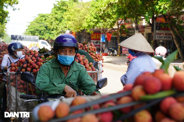 Bắc Giang: Nông dân kêu trời vì giá vải thiều lên xuống thất thường - 15