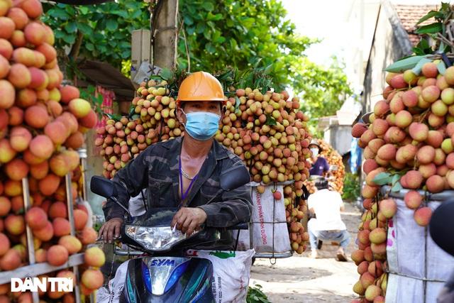 Bắc Giang: Nông dân kêu trời vì giá vải thiều lên xuống thất thường - 4